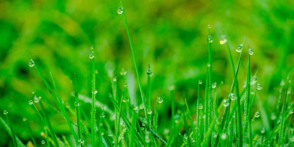 Podlewaj trawę tylko wtedy gdy tego potrzebuje - 35 Sposobów Oszczędzania Wody w Domu i Mieszkaniu